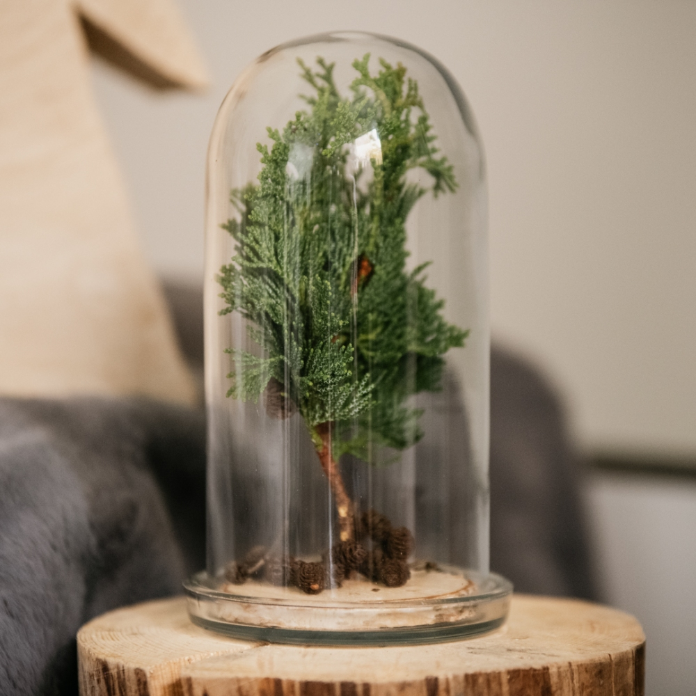 Teca in vetro di Natale con mini conifera