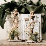 Bottiglie in vetro con Tillandsie