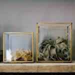Teche in vetro e ottone con Tillandsia